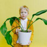 Sinaasappelboompje kamerplant